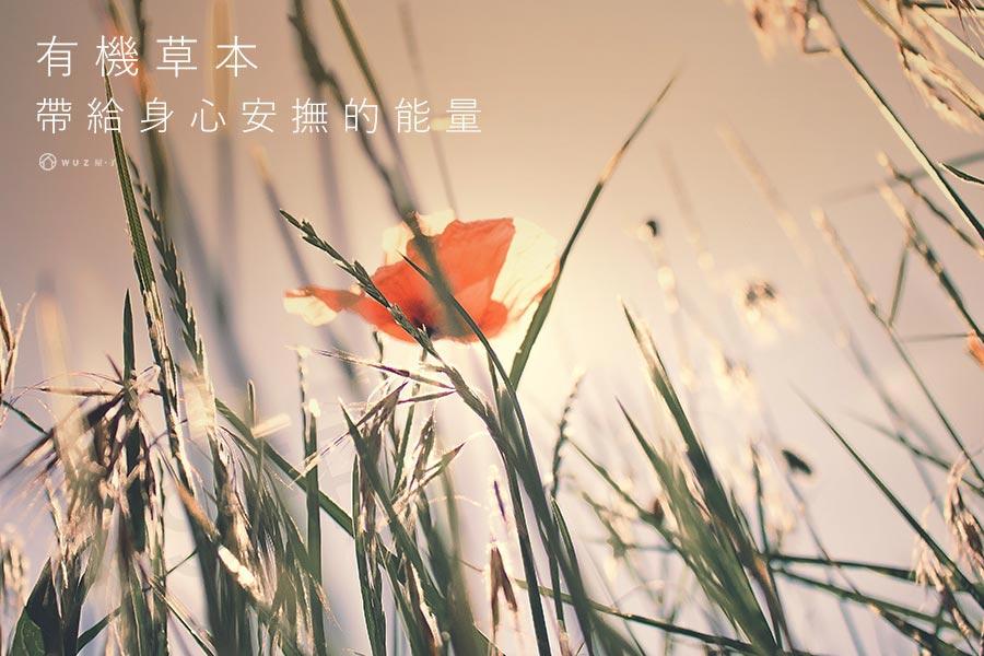 法國天然香氛擴香精油-紫羅蘭/水仙花/蘭花/伊蘭